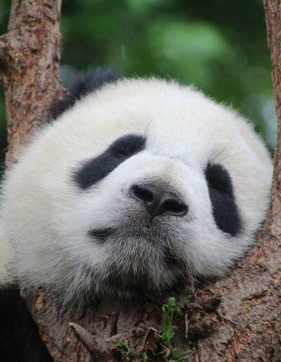 « Mini sieste » Je me détends, je me ressource